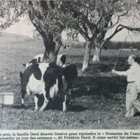 France soir magazine photo avec vache